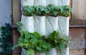 """VERTICALE groenten: """"opgroeien"""" in een kleine tuin en verwarren de katten!"""
