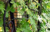 Hergebruiken omheiningen gebruikt als tuin Trellis